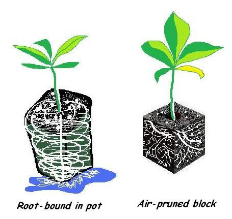 root_bound_vs._root_pruned